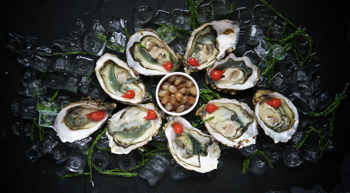 oysters_delicacy_food_fresh_gourmet_raw_