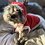 Thumbnail: Santa Dog outfit