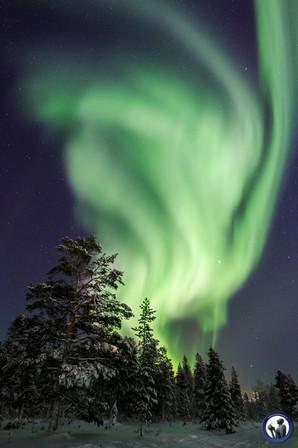Nordlicht über Saariselkä