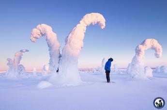 Die berühmten Salzsäulen im Riisintunturi Nationalpark