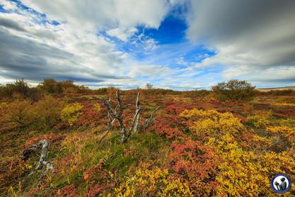 Nordskandinavien-Island-132.jpg