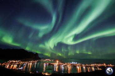 Tanzende Nordlichter über dem Reinefjord