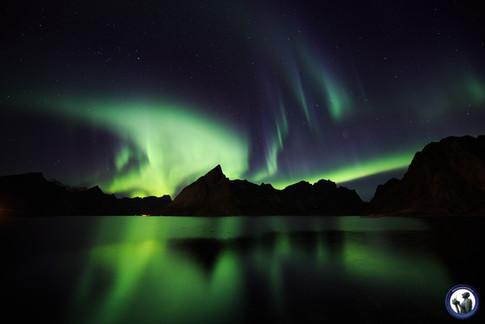 Polarlicht über Reinefjord und Olstinden