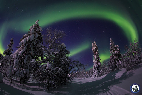 Polarlichter über Loipe in Saariselkä