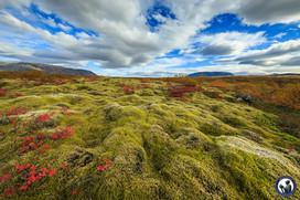 Nordskandinavien-Island-161.jpg