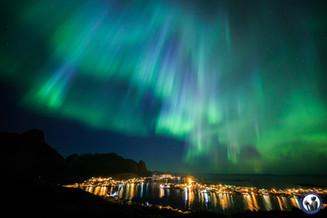 Blaue Nordlichter über dem Reinefjord