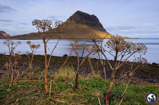 Nordskandinavien-Island-1424.jpg