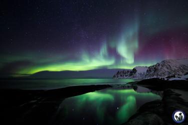 Nordlicht über dem Tungeneset in Senja