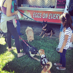 Instagram - Our four legged friends waiting for a #bayrito! Thank you to the Hum