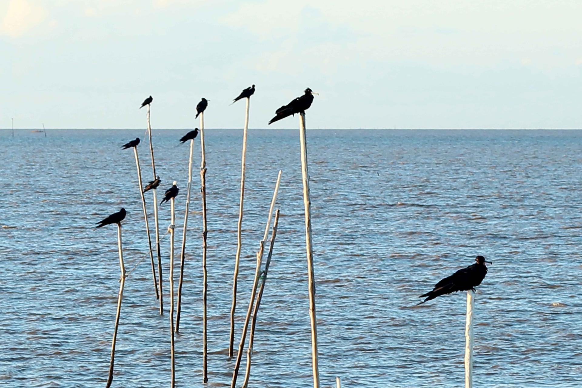 birds_on_sticks.jpg