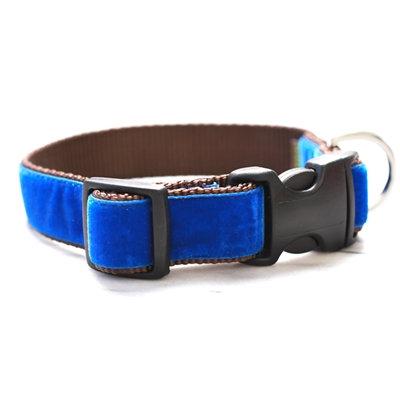'Archie' Royal Blue Velvet Collar