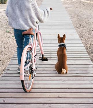 Living in Hong Kong: Pets 在港生活:飼養寵物