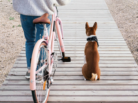 How to Run (or Bike) with (Wo)Man's Best Friend