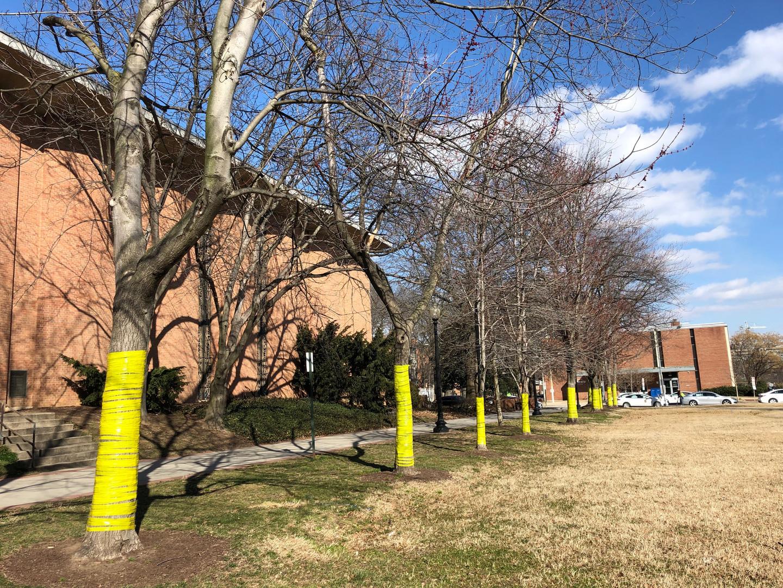 Producer  a public art installation to gather community feedback in Southwest DC  SWBID