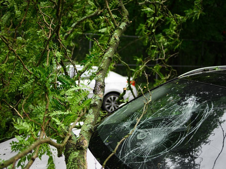 Homeowners' Insurance and Tree Damage