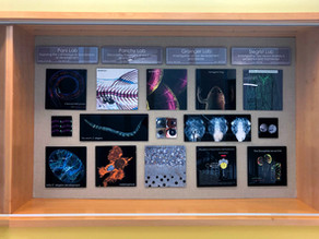 Cell Biology Art Display in Physical Life Science Building
