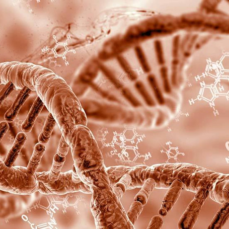 Gene to Cell Lineage
