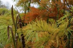 Brine Garden to Host Garden Conservancy Open Day