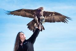 Fun, Flight, and Falconry at Green Chimneys - Sunday, June 2