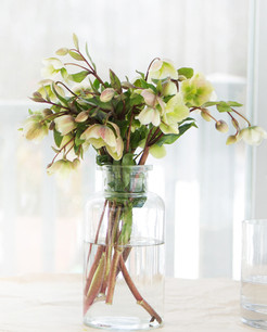 Hellebores: Early Spring Bloomers