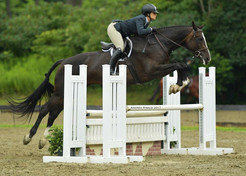 All Things Equestrian on Quaker Hill