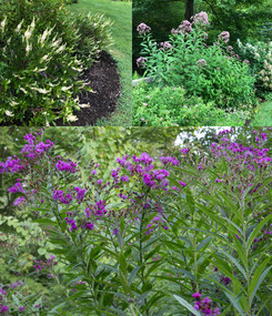 What's Blooming in the August Landscape?