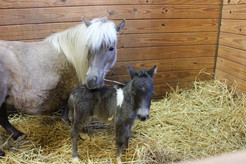 Green Chimneys Welcomes New Foal