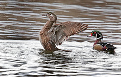 Ducks Unlimited Holds Conservation Event