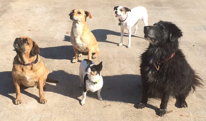 Today was bath day for Deli, Cecil, Jet, Tessa and Penny vacationing at the farm