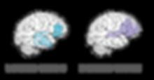 brainininsd.png