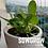 Thumbnail: SowGrow Spinach Seedballs Box
