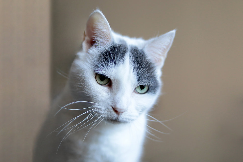 pet photography, pet photographer, cat photography, dog photography, brooklyn, pet photography near me, pet photographer near me
