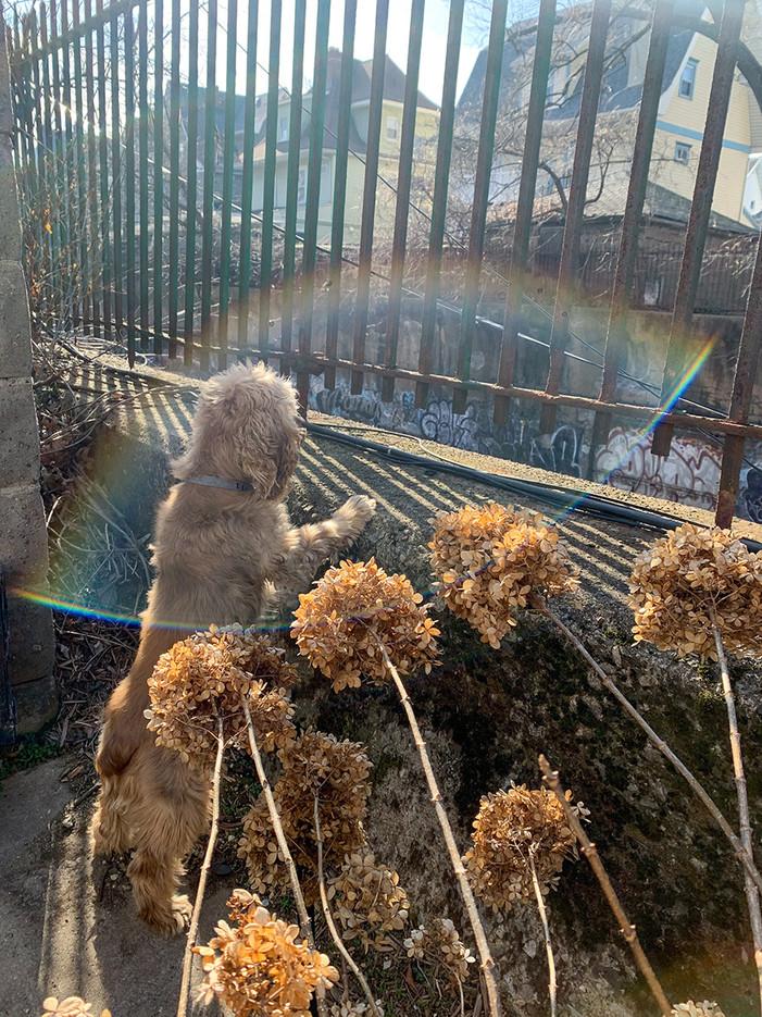 dog_rainbow SEO.jpg