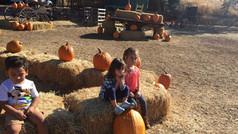PumpKin Patch - Field Trip