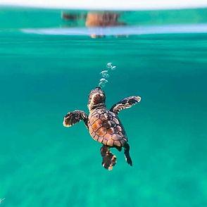 cute-baby-sea-turtle-goa.jpg