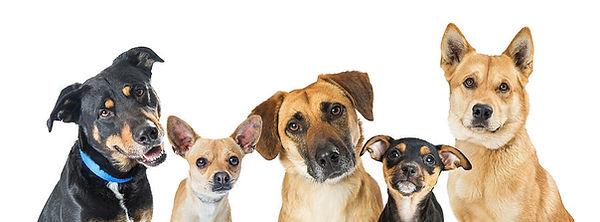 various-dogs-horizontal-web-banner-susan