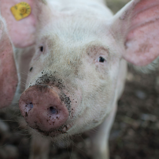 animal-photography-animals-close-up-1108