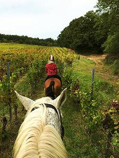 Balaton horse back riding
