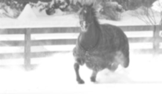 Horse running Millhaven Horse Farm, Rockville, MD