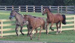 Threehorsesrunning_edited