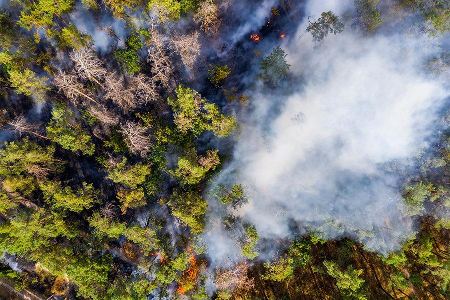 Forest Fire 8.jpg