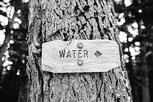 tree-595092_1280.jpg