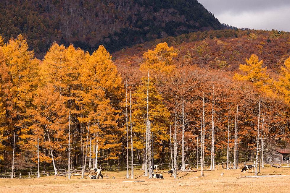 forest-landscape-in-autumn-UGHYV9M.jpg