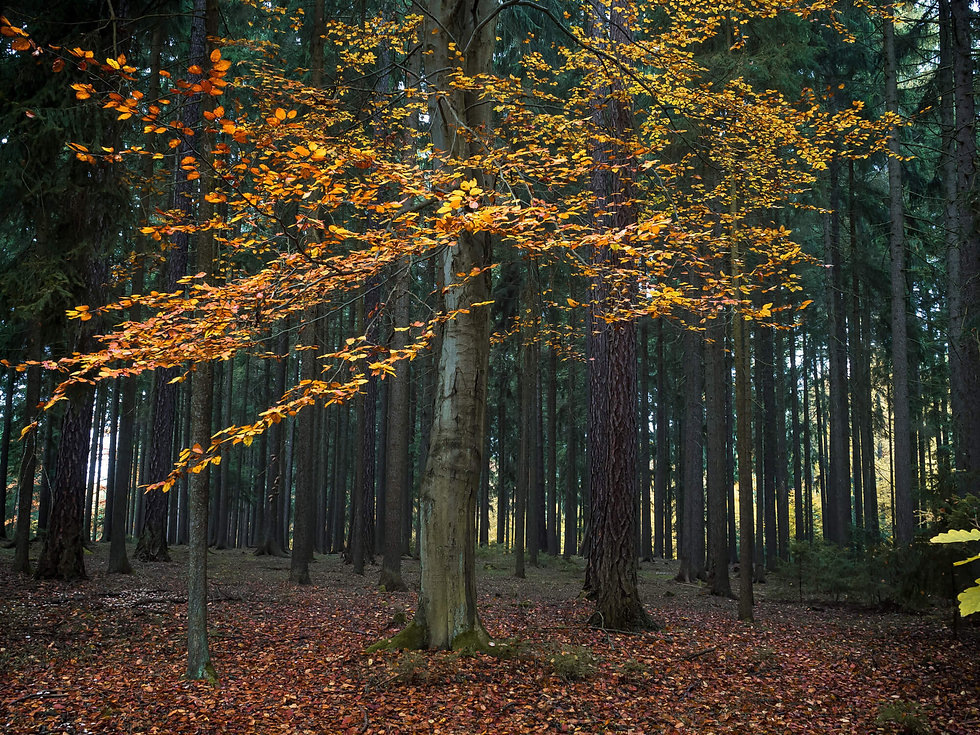 magical-forest-TP7DYU6.jpg