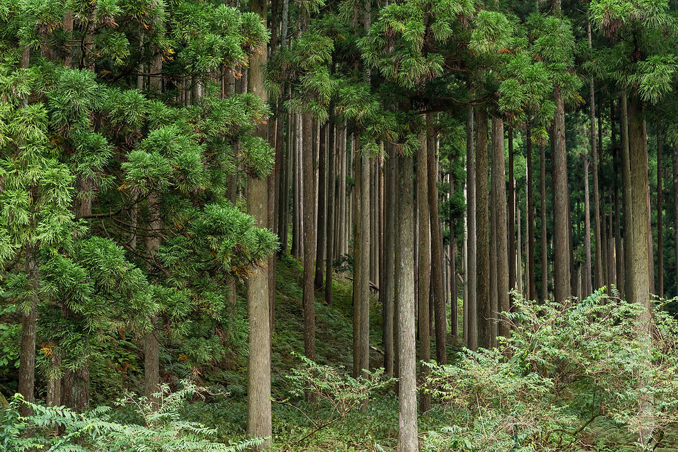 tropical-green-forest-RPY2ZF9.jpg