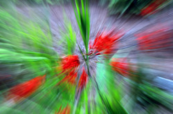 Red and Green Explosion