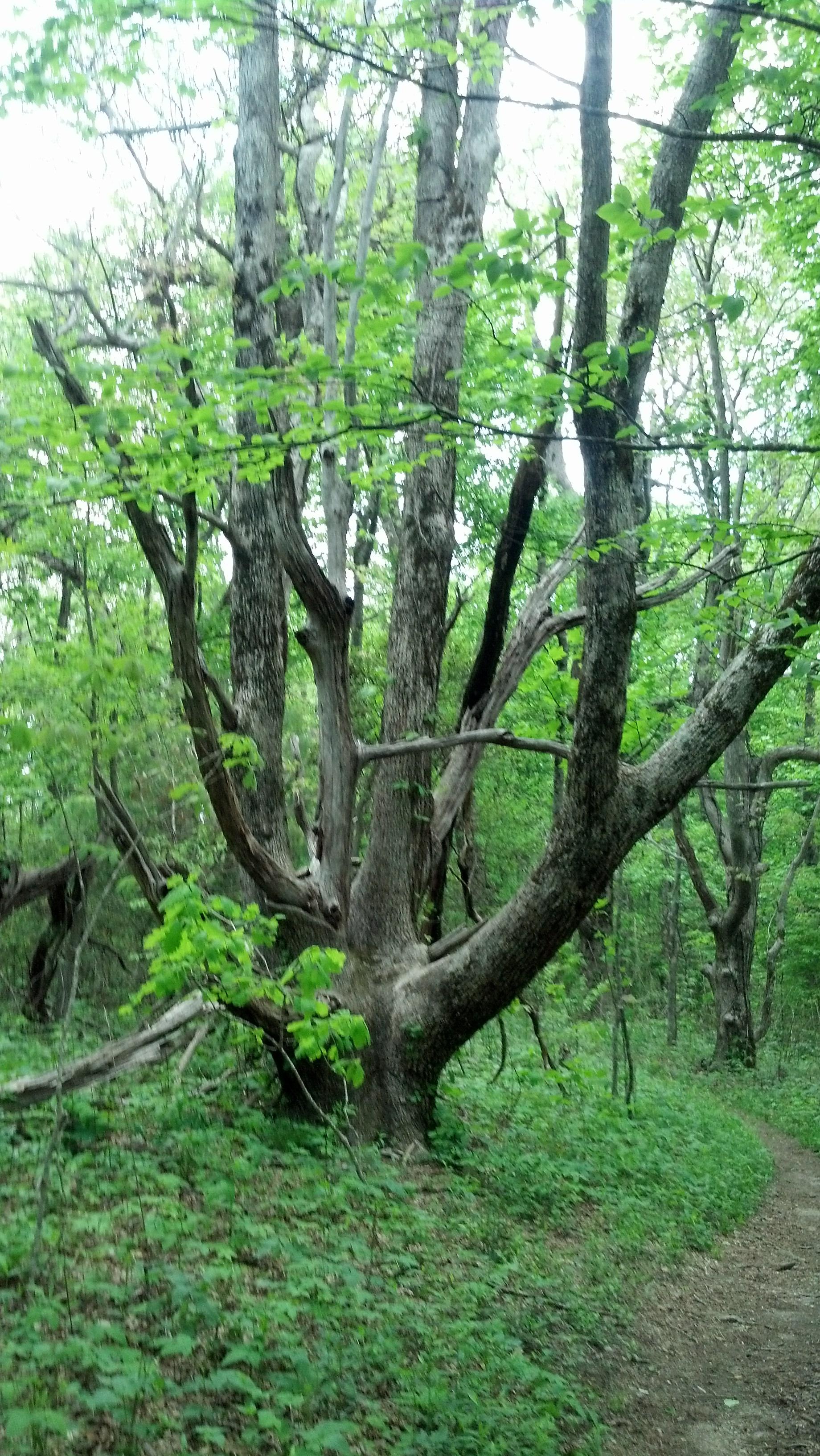 Len Foote Family Tree