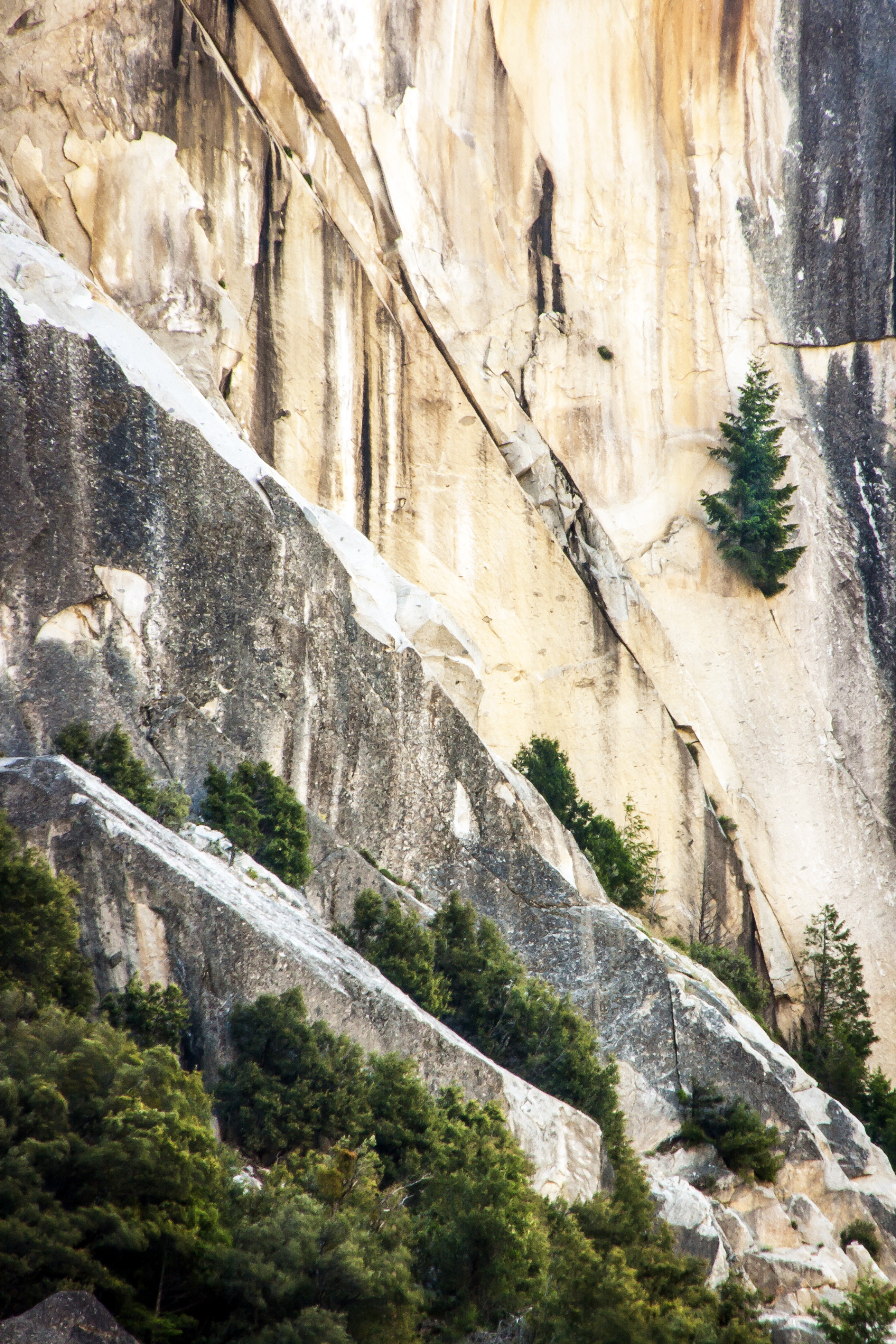 Yosemite Rock Trees