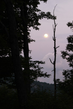Super Moon and Trees