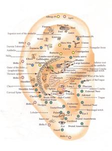 Acupressure Map on Ear - Call 043483896